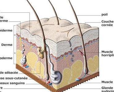 Tutoriel : adapter ses soins à son type de peau