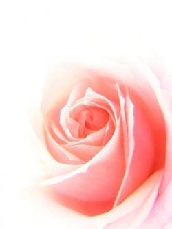 masque argile et eau de roses