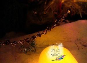 Sapin de Noël ou niche pour chats?