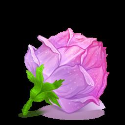 [Recette] Fabriquer une lotion tonique à la rose.