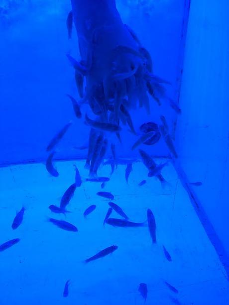 J'ai testé la fish pédicure au Moment Fish Spa du Panier à Marseille