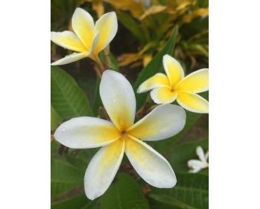 Le Monoï de Tahiti® : La tradition sacrée de la Polynésie française
