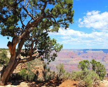 Grand Canyon, Palm Springs & Joshua Tree 🌵| #EmAndLauRunTheWestCoast