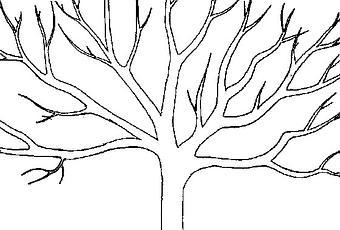 elaguer un arbre pourquoi faire appel aux pros. Black Bedroom Furniture Sets. Home Design Ideas