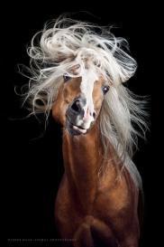 Les cheveux? C'est ma graaande passion avec … Luxéol !*