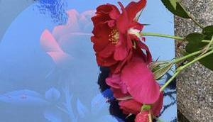 [SP] J'ai roses sauvages Marie Javet